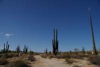 Mexico Baja Peninsula of cactus Stock photo [1132589] Cactus