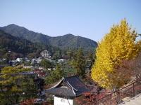 Large ginkgo of Miyajima Stock photo [1133423] Ginkgo
