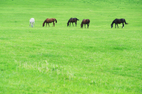 Thoroughbred of grassland Stock photo [1236491] Thoroughbred