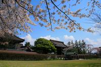 Nationally designated historic site Shonai Hanko Chidōkan and cherry Stock photo [1239781] Japan