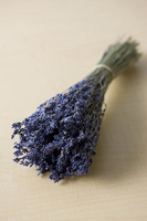 Lavender Stock photo [1240901] Plant