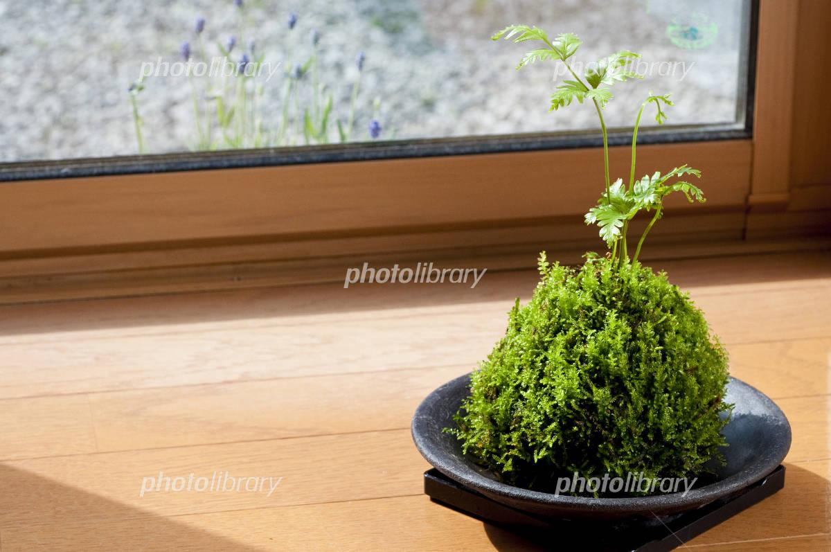 �ݶ�-stock photo