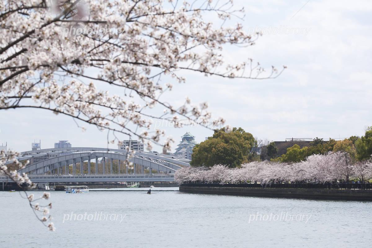 Sakura along Okawa and Osaka Castle Photo