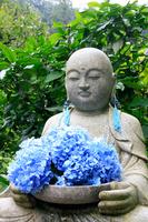 Of Meigetsuin Jizo and hydrangea Stock photo [1326246] Hydrangea