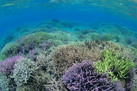 Sea of Kuroshima Stock photo [1327020] Coral