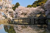 Hikone Castle Otemon Bridge Stock photo [1328830] Bridge
