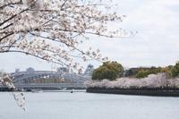 Sakura along Okawa and Osaka Castle Stock photo [1333213] Spring