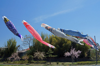 Carp streamer Stock photo [1335687] Carp