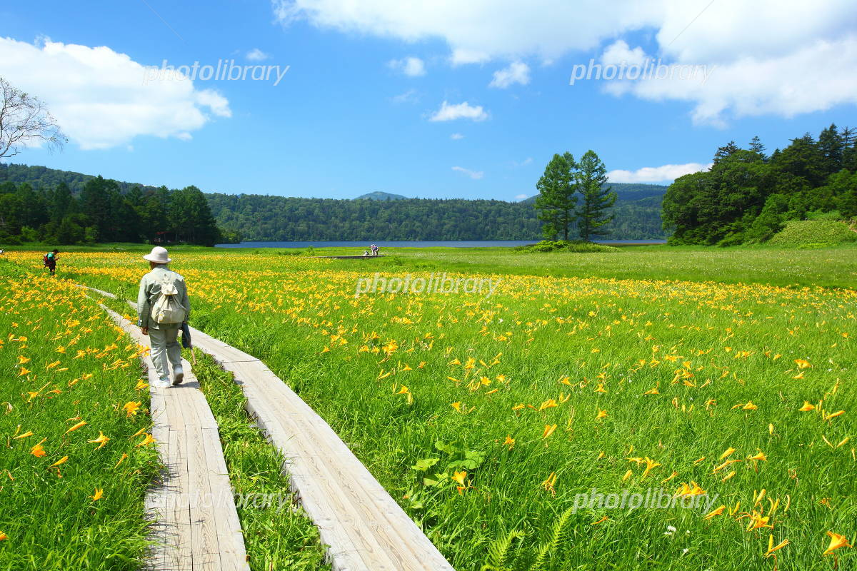 Oze Oe wetlands of day lily Photo