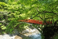 Kyoto finger Tsukihashi and fresh green Stock photo [1409984] Finger