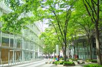 Fresh green of Tokyo International Forum Stock photo [1412033] Tokyo