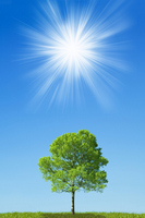 Blue sky and the sun and one tree Stock photo [1414412] Wood