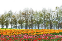 Hirugano plateau of spring Stock photo [1415641] Hirugano