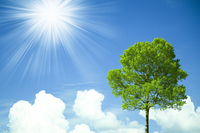 Blue sky and the sun and one tree Stock photo [1416355] Wood