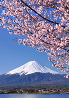 Cherry Kawaguchiko banks and Mount Fuji Stock photo [1416747] Mt.