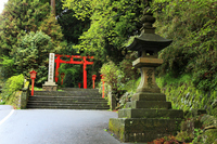 Fresh green of Hakone Shrine approach Stock photo [1419604] Hakone