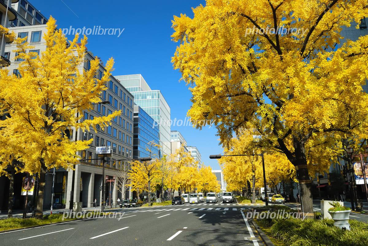Fall of Osaka Midosuji Photo