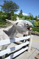 Horse Stock photo [1505180] Horse