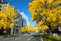 Fall of Osaka Midosuji Stock photo [1505710] Ginkgo