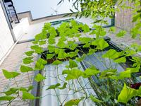 Green Curtain Stock photo [1508207] Green