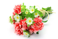 Carnation Stock photo [1509943] Carnation