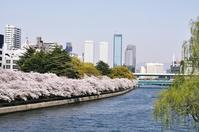 Tenmabashi-Okawa cherry Stock photo [1512845] Osaka