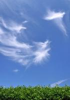 Summer sky Stock photo [1516140] Empty