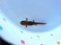 Salamander Stock photo [1516824] Salamander