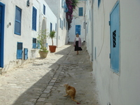Cat and a woman of Sidi Bou Said Stock photo [1613122] Tunisia
