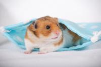 Hamster Stock photo [1614112] Animal