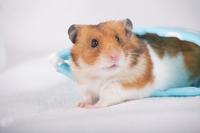 Hamster Stock photo [1614115] Animal