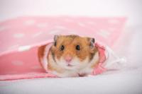 Hamster Stock photo [1614120] Animal