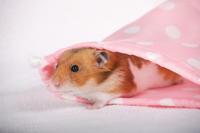 Hamster Stock photo [1614123] Animal