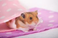 Hamster Stock photo [1614124] Animal