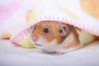 Hamster Stock photo [1614131] Animal