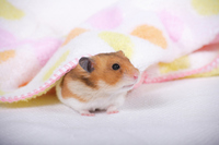 Hamster Stock photo [1614133] Animal