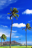 Magic Island palm and Diamond Head Stock photo [1614569] Magic