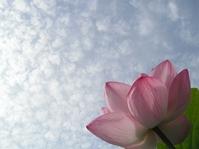Lotus and sky Stock photo [1616398] Lotus