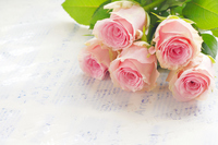 Pink Roses Stock photo [1618817] Rose
