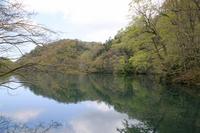 Shirokami Juniko cockscomb field of pond Stock photo [1620894] Shirakami