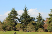 Cedar Stock photo [1715465] Cedar