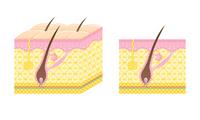 Hair cross section [1720984] Mao