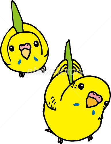 黄色いセキセイインコ イラスト素材 1791084 フォトライブラリー