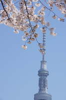 Sakura and Sky Tree Stock photo [1900061] Sky