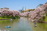 Boating of blossom viewers in Chidorigafuchi of cherry blossoms Stock photo [1901293] Cherry