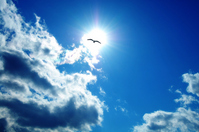 Blue sky and the sun and the seagull and clouds Stock photo [1901548] The
