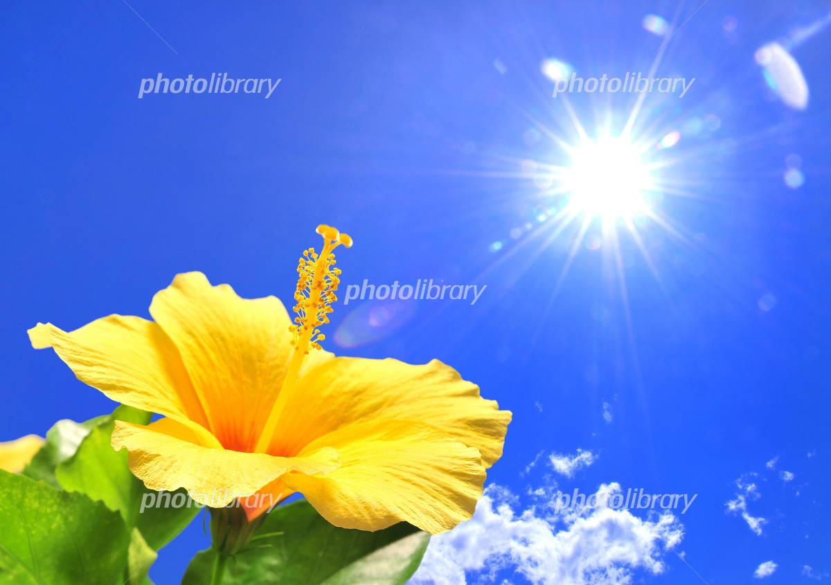 Hibiscus and sun Photo
