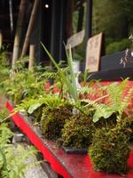Moss ball Stock photo [2004360] Natural