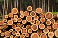 Timber Stock photo [2009200] Log