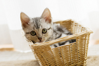 Kitten that went into the basket Stock photo [2009866] CAT
